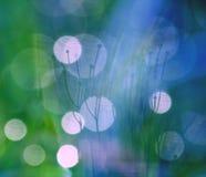 Lichten en grassprietjes Stock Afbeeldingen