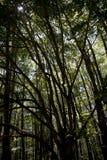 Lichten en schaduwen in een bos Stock Foto