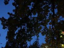 Lichten op takken van bomen worden ontworpen die stock video