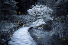 Lichter, die im Wald funkeln Stockfotos