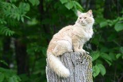 Lichtgeele kattenzitting op een boomstomp Stock Fotografie