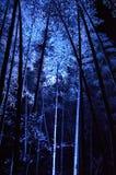 Lichtgevend bamboebosje, een nacht van Kyoto Royalty-vrije Stock Afbeelding