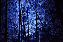 Lichtgevend bamboebosje, een nacht van Kyoto Stock Afbeelding
