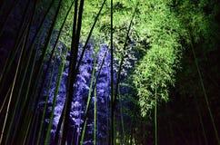 Lichtgevend bamboebosje, een nacht van Kyoto Stock Fotografie