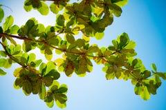 Lichtgevende Bladeren in Azure Sky Royalty-vrije Stock Afbeelding