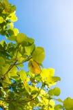 Lichtgevende Bladeren in Azure Sky 2 Royalty-vrije Stock Fotografie