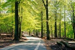 Lichtgroen bos Stock Afbeeldingen