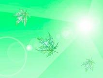 Lichtgroene achtergrond met bladeren, ecoontwerp Royalty-vrije Stock Fotografie