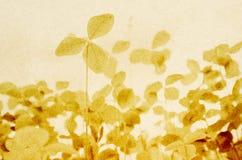 Lichtgroene klaver op lichtgrijze textuur Stock Afbeeldingen