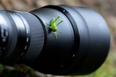 Lichtgroene sprinkhanen die boven de cameralens worden neergestreken stock afbeeldingen