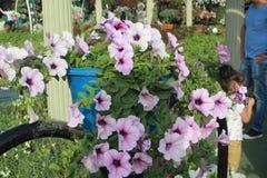 Lichtpaarse Bloemen in het mirakeltuin van Doubai royalty-vrije stock afbeeldingen