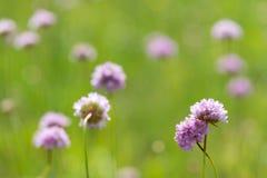 Lichtrose wilde bloemen op groene achtergrond Stock Fotografie