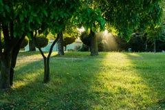 Lichtstrahl auf Gras im Park Lizenzfreies Stockbild