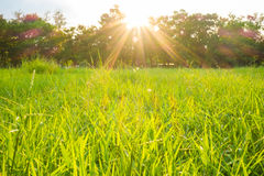 Lichtstrahl Sun auf Park mit grünem Gras des Baums Stockbild