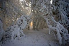 Lichtstrahl zwischen den Zweigen umfaßt mit Schnee stockfoto