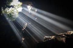 Lichtstrahlen in der Höhle Stockbilder