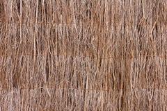 Lichtstrahlen der trockenen Zweige Stockbild