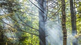 Lichtstrahlen durch Rauch lizenzfreies stockbild