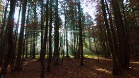 Lichtstrahlen im Herbstwald stock footage