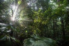 Lichtstrahlen und Regenwald Stockfotos
