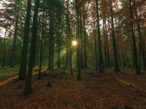 Lichtstralen in de herfstbos royalty-vrije stock foto
