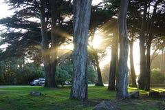 Lichtstralen in gouden poortpark stock afbeelding