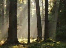 Lichtstralen ib bos stock afbeeldingen
