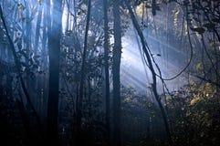 Lichtung Stockbild
