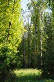 Lichtung belichtet durch Sonnenlicht im Mischwald Stockbilder