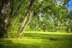 Lichtung im Wald lizenzfreies stockfoto