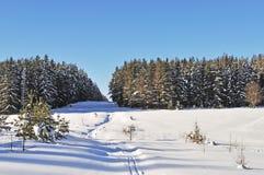 Lichtung im Winterwald am sonnigen Tag Lizenzfreie Stockfotografie