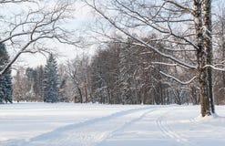 Lichtung mit dem Wald belichtet durch die Wintersonne stockbild