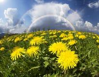 Lichtungsfrühlings- und -sommerblumen Stockfoto