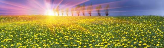 Lichtungsfrühlings- und -sommerblumen Lizenzfreie Stockbilder