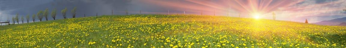 Lichtungsfrühlings- und -sommerblumen Lizenzfreies Stockbild