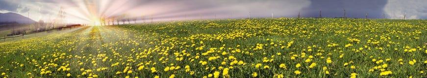 Lichtungsfrühlings- und -sommerblumen Stockfotografie