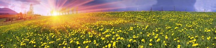 Lichtungsfrühlings- und -sommerblumen Lizenzfreie Stockfotografie