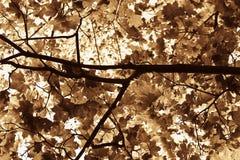 liście jesienią Zdjęcie Stock