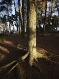 Lickey hills Royalty Free Stock Photo