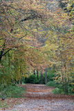 Lickey Hills Country Park Stock Photography