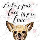 Licking your face is pure love. Stock Image