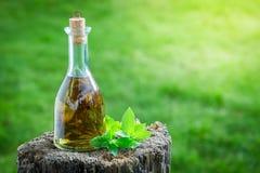 Licor natural y hecho en casa con la menta y el alcohol fotos de archivo libres de regalías