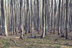 Liczący drzewa w deciduous lesie w górze zdjęcie stock