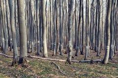 Liczący drzewa w deciduous lesie w halnym Spadać drzewie zdjęcia royalty free