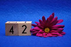 Liczba czterdzieści dwa z purpurową stokrotką fotografia stock