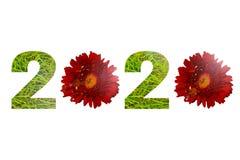 Liczba 2020 zrobił zielonej trawy i czerwieni stokrotki kwiaty odizolowywających na białym tle obraz royalty free