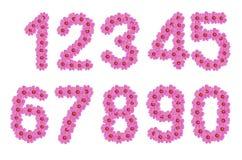Liczby kosmosów kwiaty Obraz Royalty Free