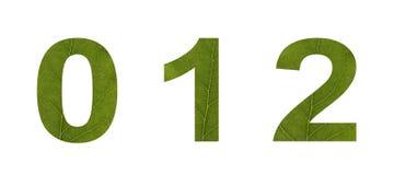 Liczby od zielonych li?ci na bia?ym odosobnionym tle Makro- strzelanina Poj?cie: ekologia zdjęcie royalty free
