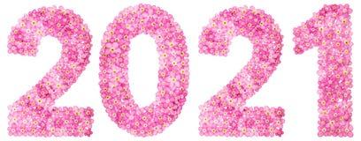 Liczebnik 2021 od różowych niezapominajkowych kwiatów, odosobnionych na bielu Zdjęcie Stock