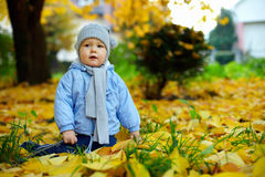 Śliczna chłopiec wśród spadać liść w jesień parku Fotografia Stock